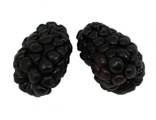 Berries, Blackberry