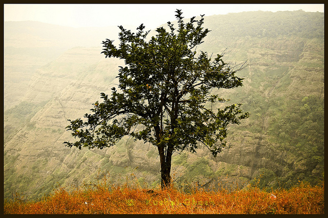 """One Tree"" courtesy Khalul Ghosh/flickr (CC BY-NC-ND)"