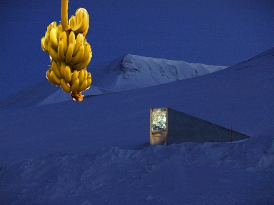 Background photo credit: Mari Tefre/Svalbard Global Seed Vault
