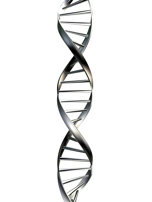 Biology Dna On Emaze