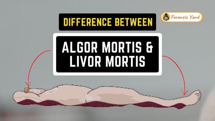 Difference Between Algor Mortis and Livor Mortis Forensic Yard