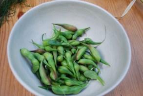 Daikon Raddish Seed Pods