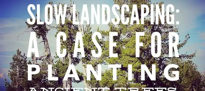 Slow Landscaping. A case for planting ancient trees in coast paced cities.