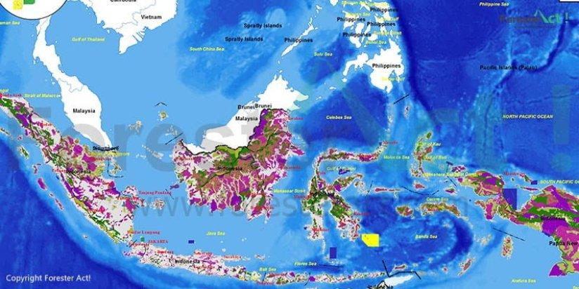 Peta Hutan Indonesia