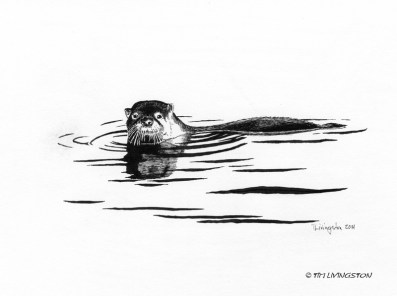 otter, pen and ink, drawing, ink, wildlife