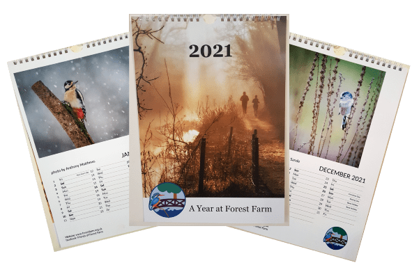 'A Year at Forest Farm' Calendar for 2021 – Now Available!