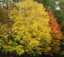 Nov 2 2013 parkway fall color 011