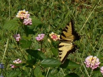 July 20, 2014 butterflies 040