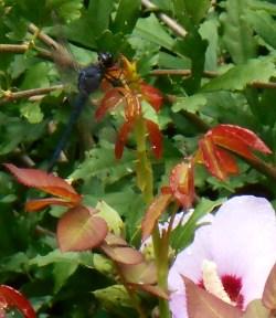 August 19, 2014 lavender 030