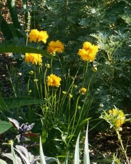June 16, 2015 blooming in June 013