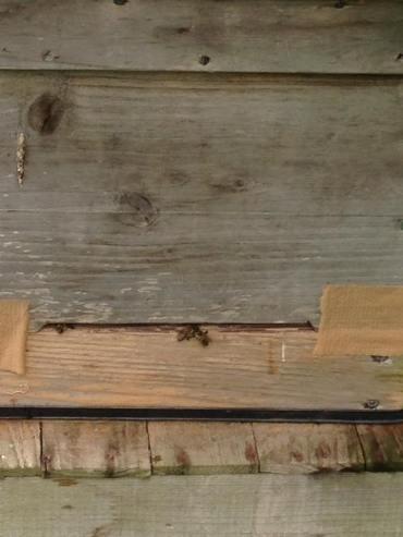 蜜蜂🐝ご入居??
