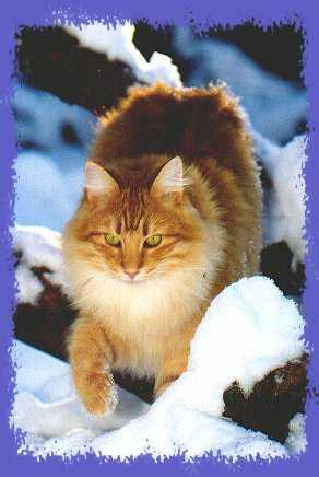Icecat's Fritz the Cat