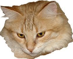 icecats-kenya-kanel