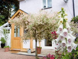 holiday_cottage_forest_of_dean