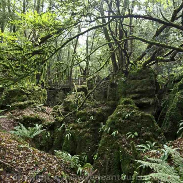 Forest of Dean & Wye Valley, Puzzlewood