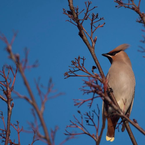 bird-watching-forest-of-dean