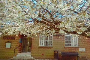 Photo of the entrance to the Peter Griffits Hall under the cherry blossoms.