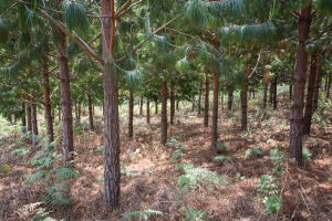 Smallholder forestry plot in Tanzania