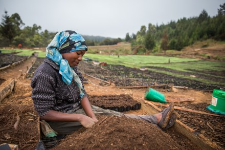 Worker at tree nursery in Tanzania - FDT supports existing commercial nurseries with training on best practices
