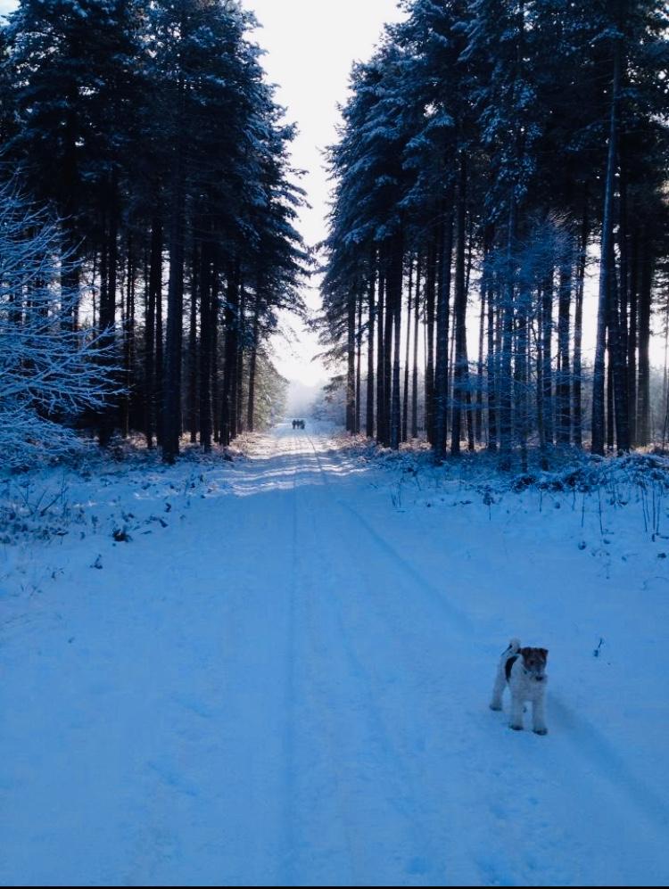 Dog Walking, Sherwood Pines in Winter