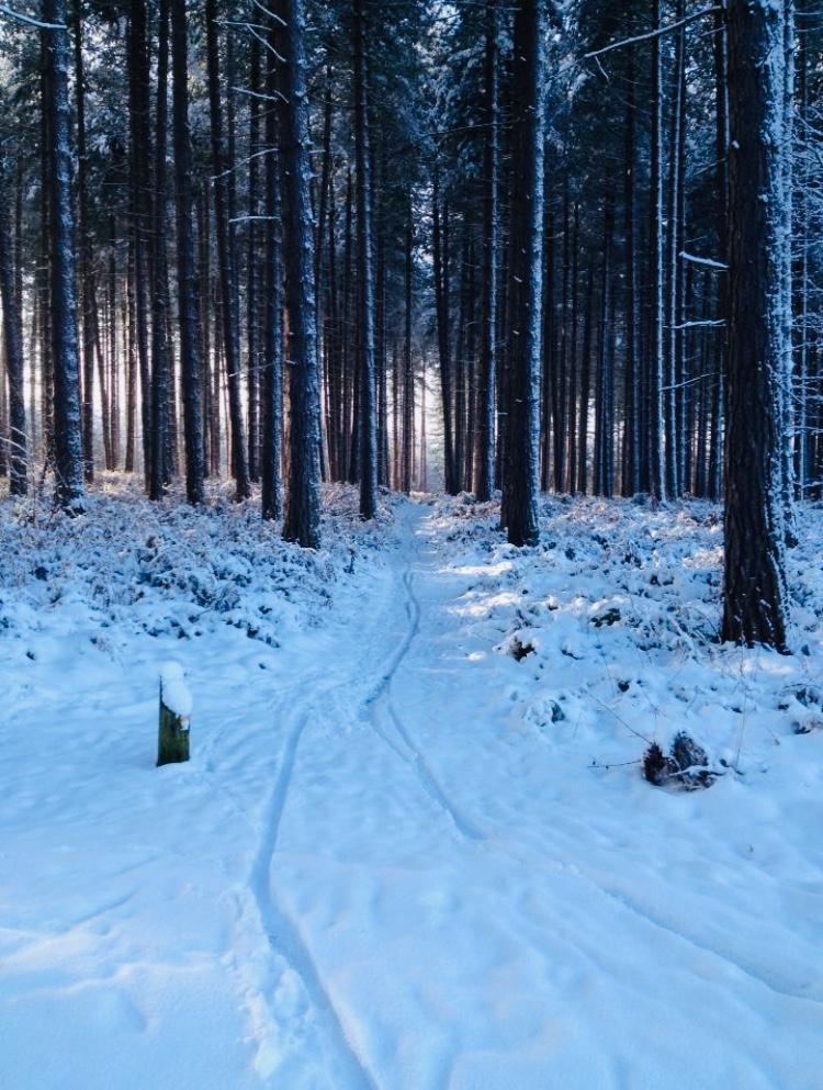 Sherwood Pines in Winter