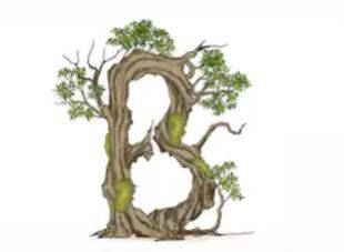 B - Lexicon of Forestry - LoF - Forestrypedia