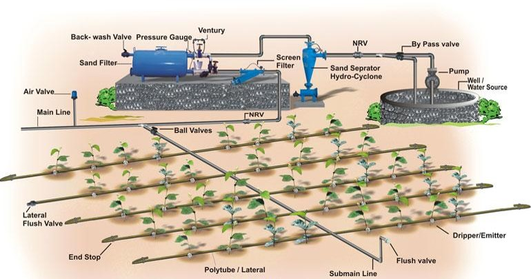 Drip Irrigation Vs Flow Irrigation - Forestrypedia