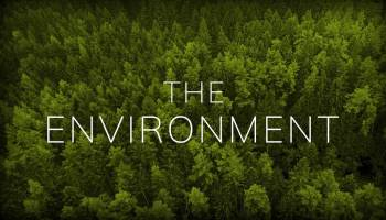 Environment - Influence of Forests on Environment - Forestrypedia