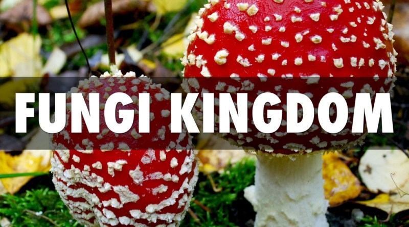 Fungi Classification by Ainsworth - Forestrypedia