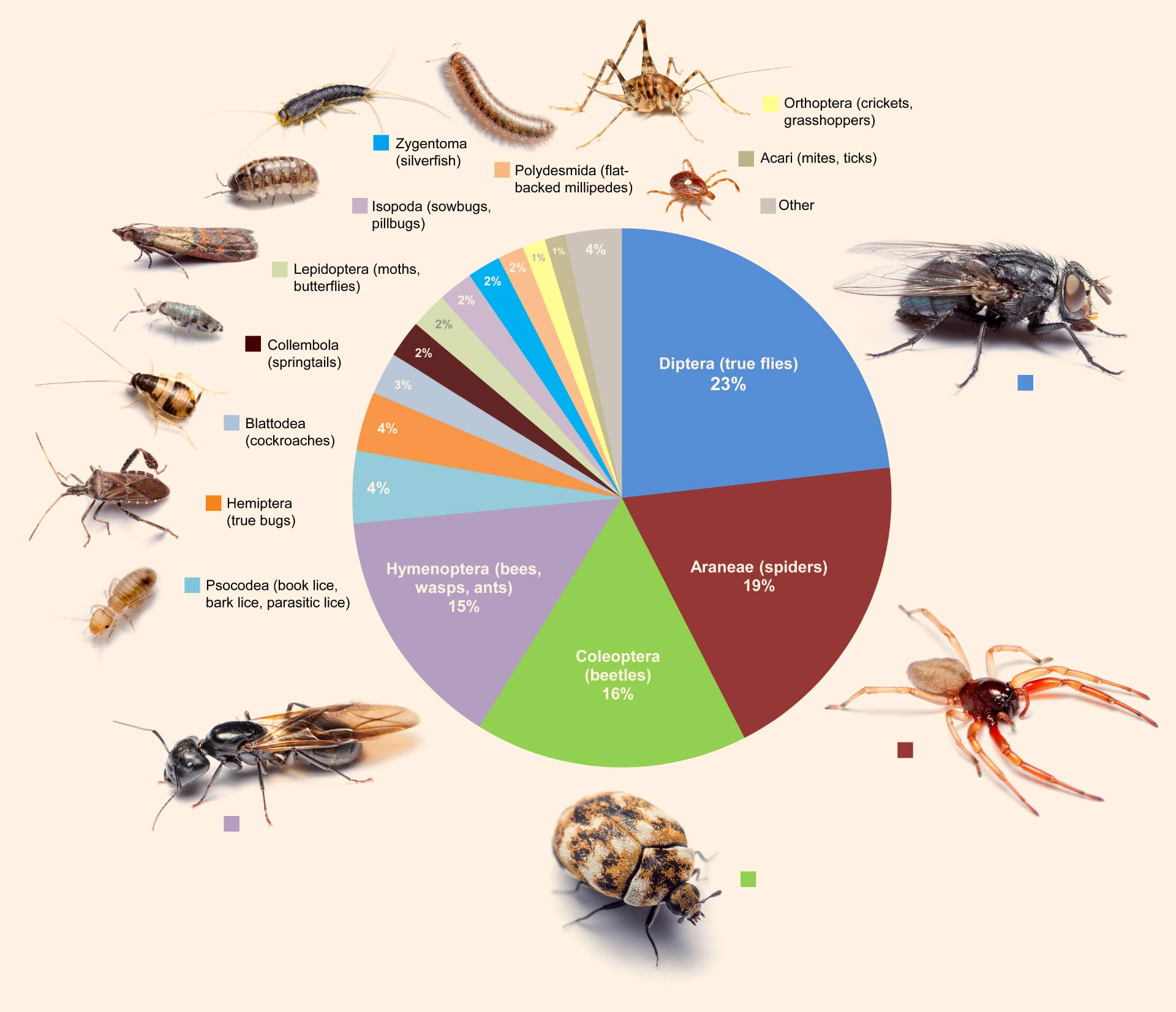 Insects Species and their distribution - Forestrypedia