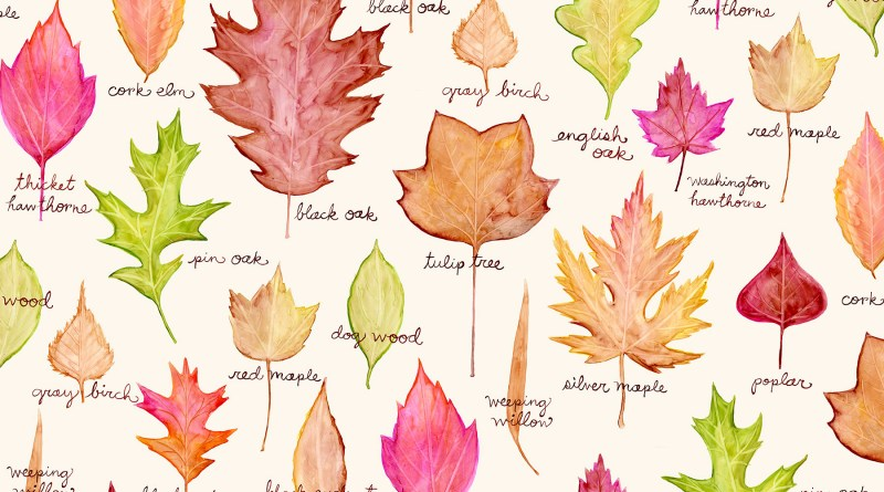 Leaf Collection - Forestrypedia