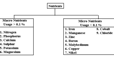 Macro and Micronutrients Essential for the Growth of Plants | Flow Chart - forestrypedia.com
