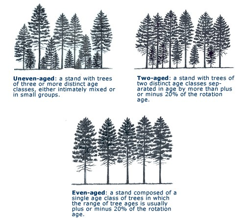 Two Storied High Forest - Forestrypedia