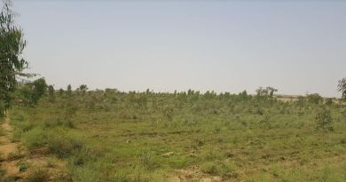 Afforestation - Forestrypedia