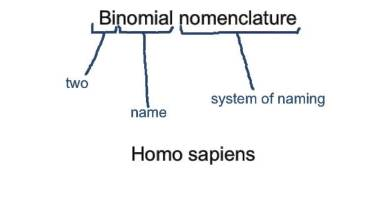 Binomial nomenclature - Forestrypedia