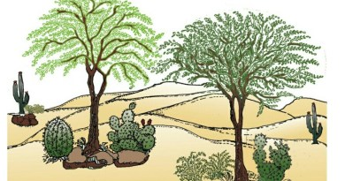 Cover Nurse Crop - Cultural Operations - Forestrypedia