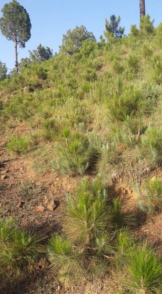 Concept of Closure to enhance Natural Regeneration - Forestrypedia