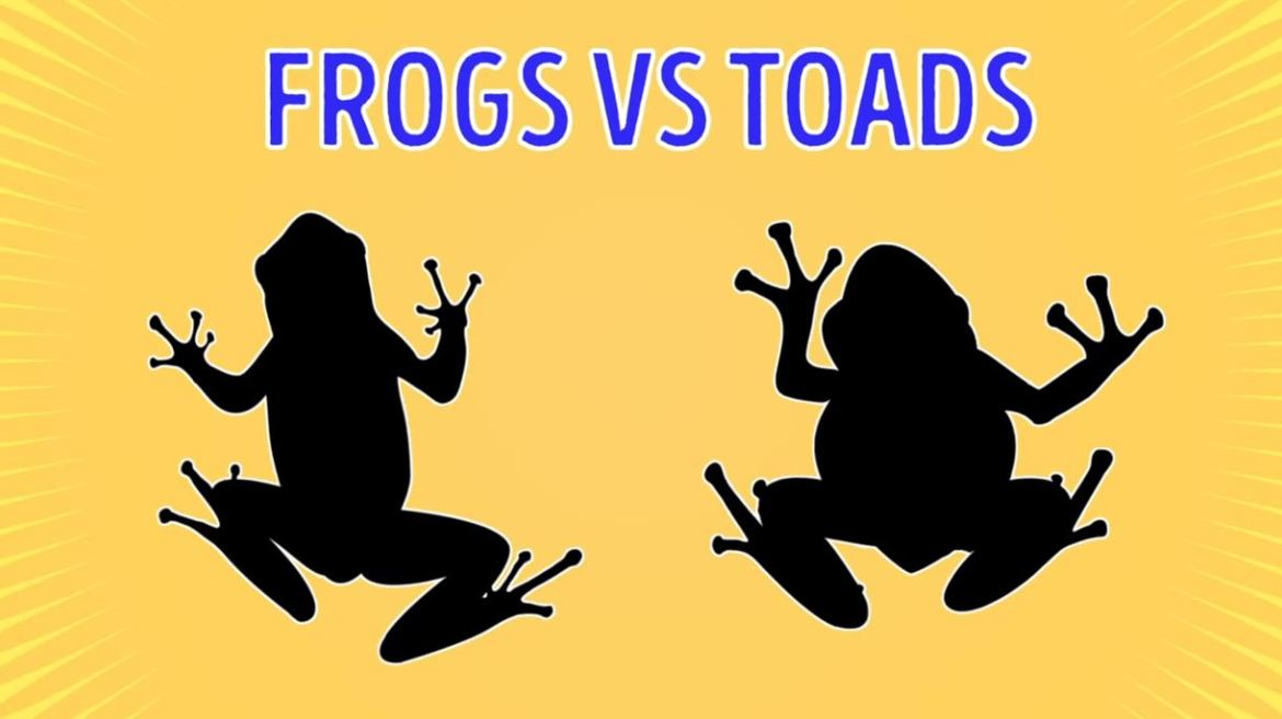 Frogs Vs Toads - Forestrypedia