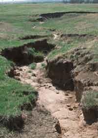 Gully Erosion - Forestrypedia