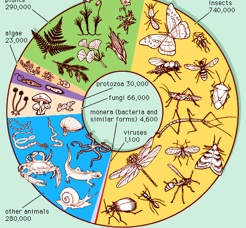 Classification of Plant Kingdom - Forestrypedia