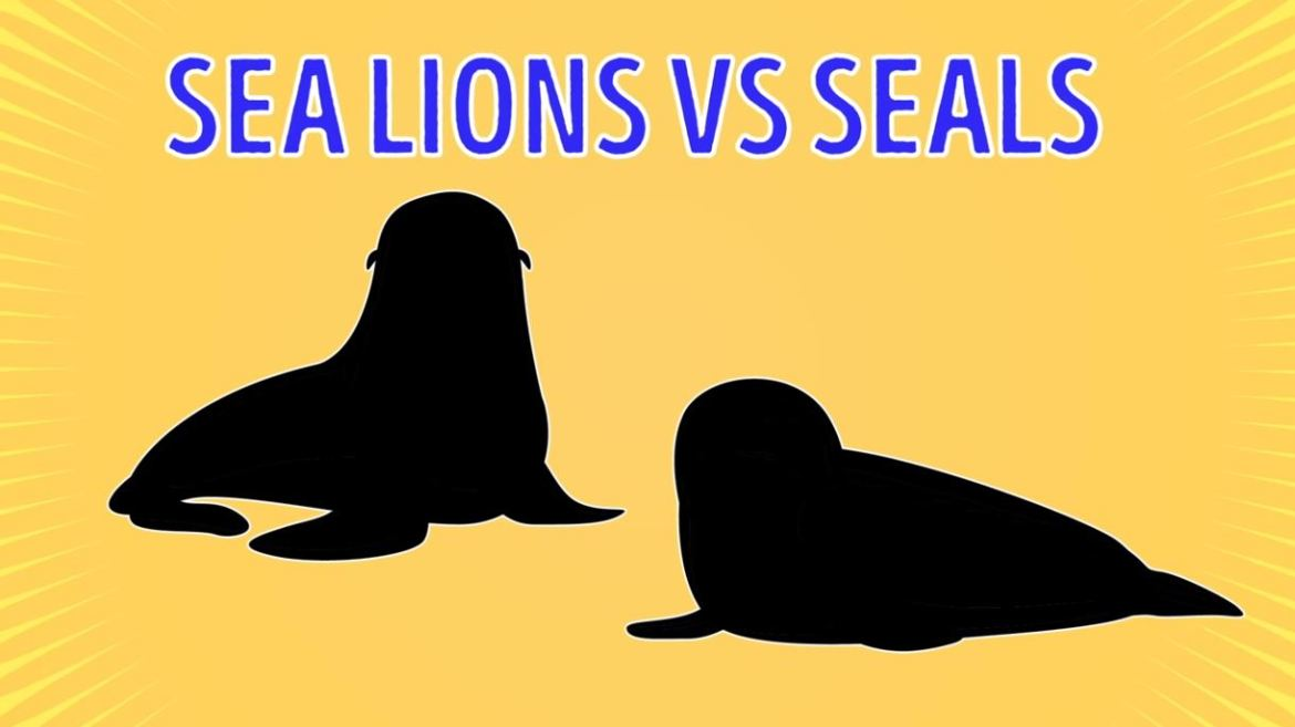 Sea Lions Vs Seals - Forestrypedia