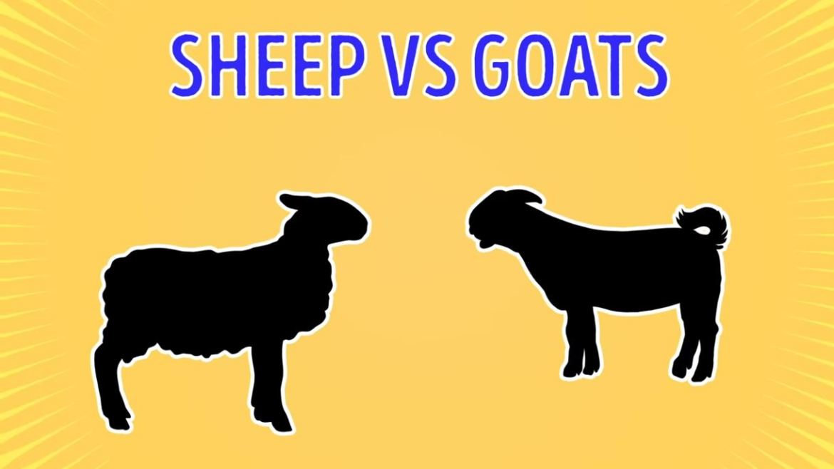 Sheep Vs Goats - Forestrypedia