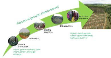 Tree Breeding - Forestrypedia