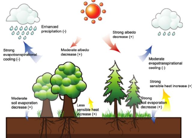 Effects of Forests on Rainfall - Vegetatio and Precipitation - Forestrypedia