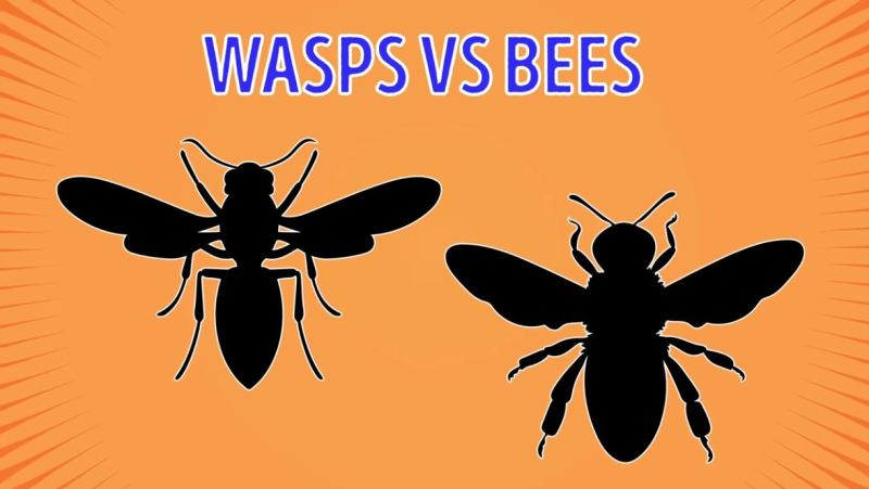 Wasps Vs Bees - Forestrypedia