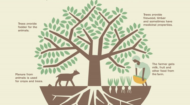 Agroforestry and Farm Forestry in Punjab - Forestrypedia