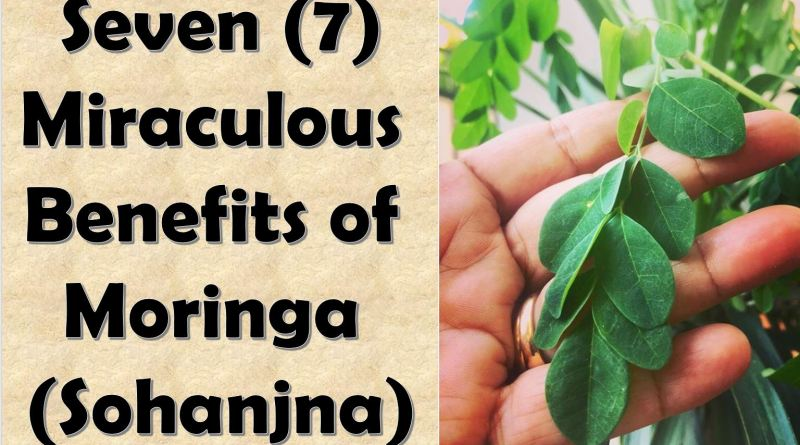 7 Miraculous Benefits of Moringa (Sohanjna)