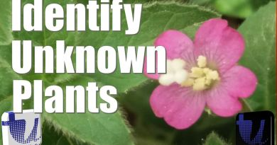 Identify Unknown Plants using Your Mobile