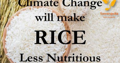Climate change will make Rice less Nutritious