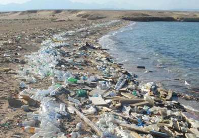 There will be More Plastic in the Ocean than Fish by 2050